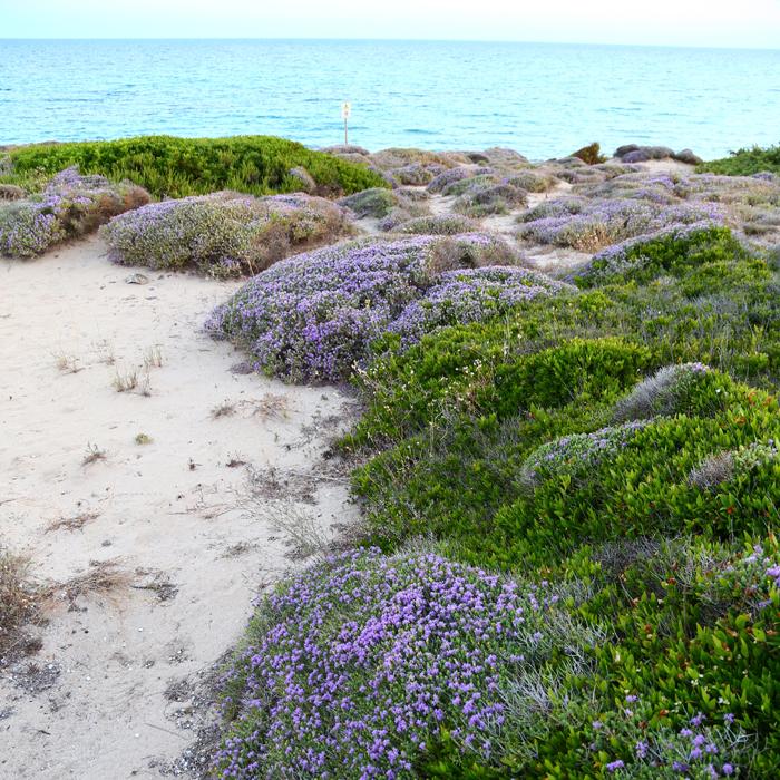 spiaggia-vicino-al-bb-le-vele-a-campomarino-di-maruggio